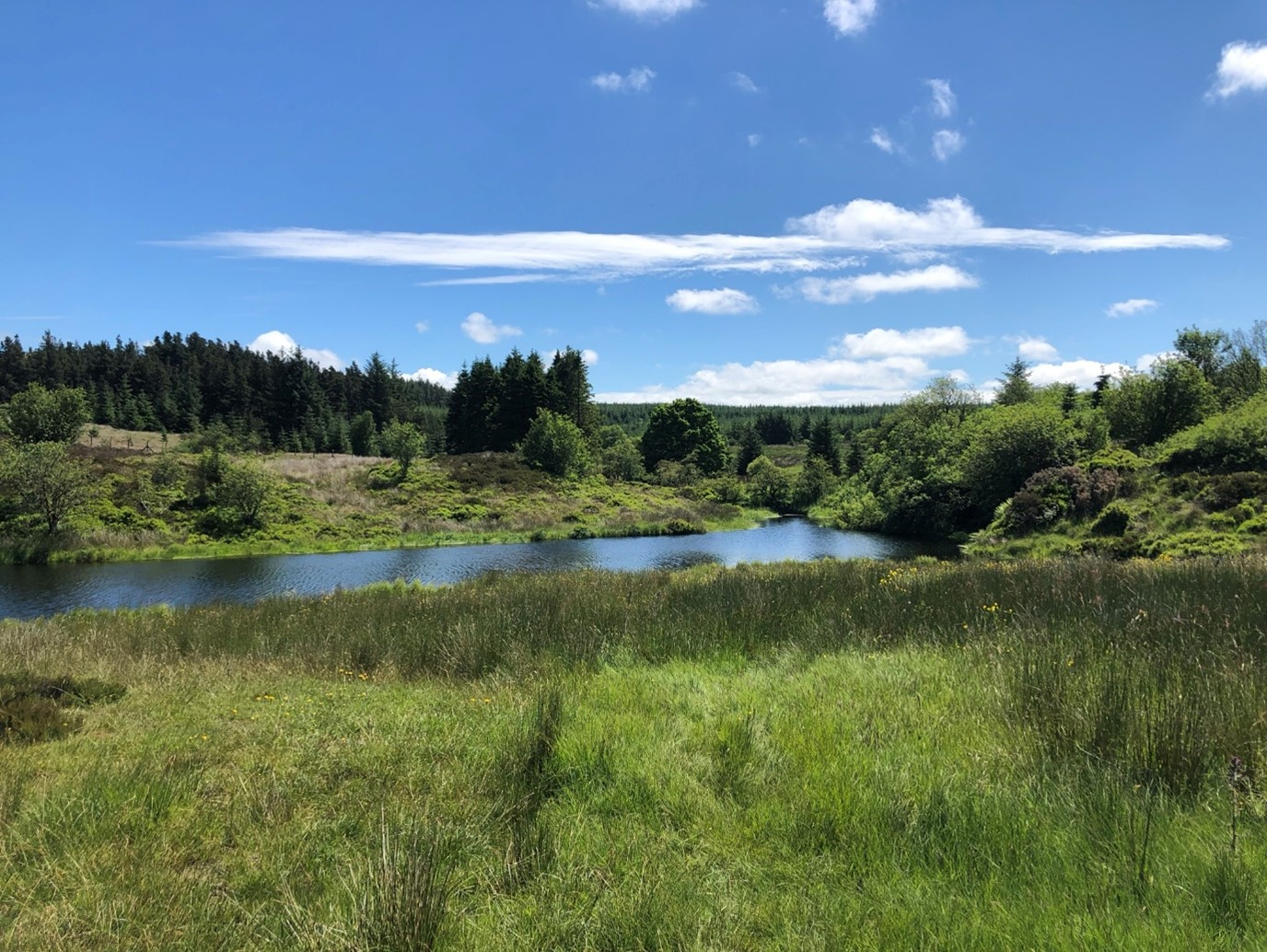 View of lake through mid ulster forests.